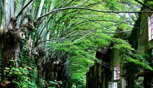 Isabella Santoro La vegetazione si impossessa della fabbrica