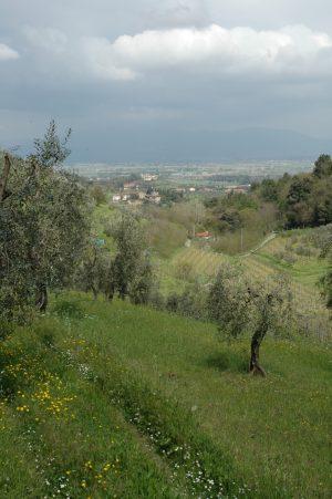 Carmignano_A004
