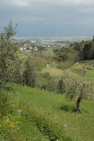 Carmignano_A005