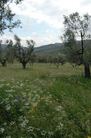 Carmignano_A013