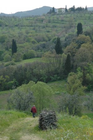 Carmignano_A014
