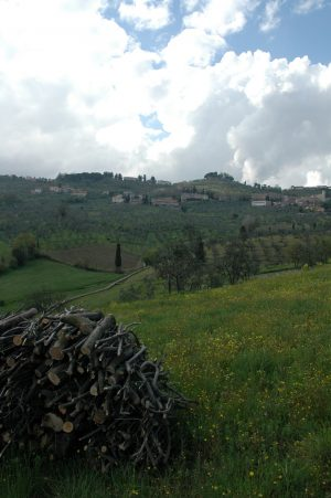 Carmignano_A016