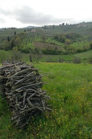 Carmignano_A017