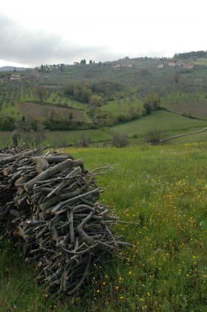 Carmignano_A018