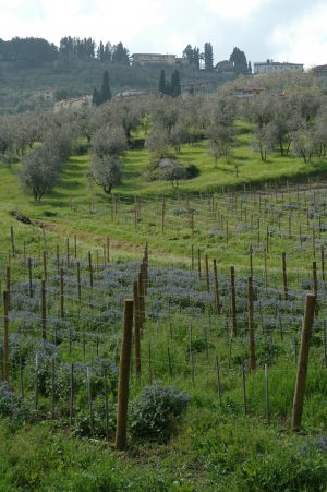 Carmignano_A027