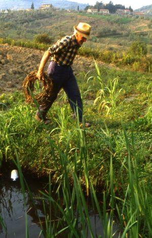 lavoro_contadino con raccolto di salice_491x768