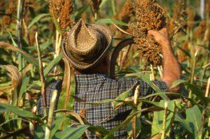 lavoro_contadino nel campo_1024x680