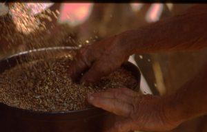 lavoro_mani nelle semente_1024x655