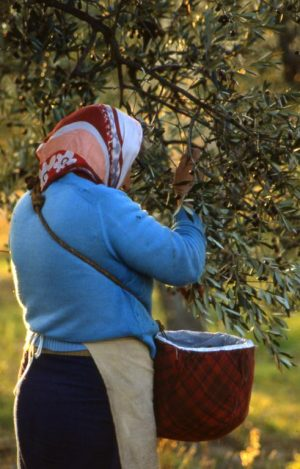 olivo_brucatura da terra donna con foulard_491x768